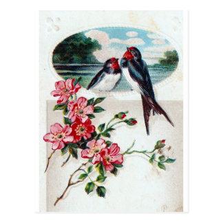 Vintage Barn Swallows Postcard