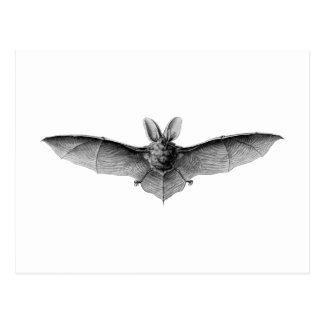 Vintage Bat Illustration Postcard