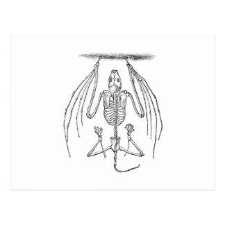 Vintage Bat Skeleton- Bats and Halloween Template Postcard