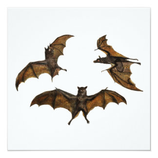 Vintage Bat Trio on White Card