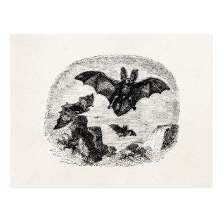 Vintage Bats Flying 1800s Big Eared Bat Drawing Postcard