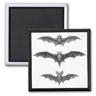 Vintage Bats Gothic Horror Punk Magnet