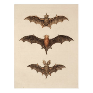 Vintage Bats Halloween Postcard