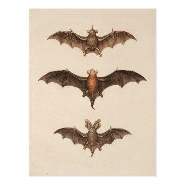 Halloween Themed Vintage Bats Halloween Postcard