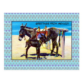 Vintage beach donkeys greetings from Mexico Postcard