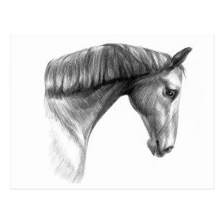 Vintage Beautiful Dark Horse Postcards