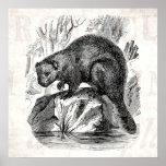 Vintage Beaver 1800s Beavers Illustration Template Poster