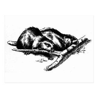 Vintage Beaver Postcard