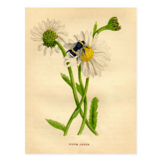 Vintage Bee and Daisy Post Card