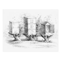 Vintage Bee Boxes Honey Postcard