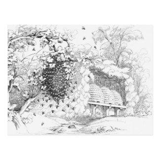 Vintage Bee Hives Postcard