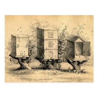 Vintage Beekeeping Beehives Beehive Postcard