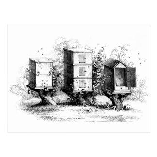 Vintage Bees Beehive Beekeeping Beehives Postcard