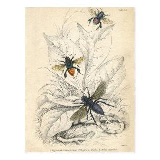 VIntage Bees Postcard