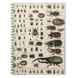 Vintage Beetle Illustration Spiral Note Book