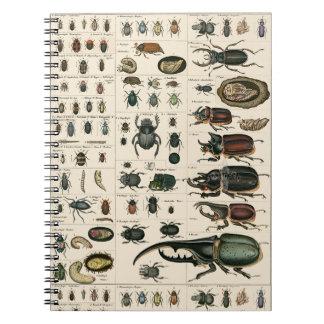 Vintage Beetle Illustration Spiral Notebook