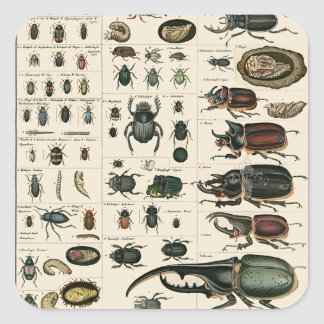 Vintage Beetle Illustration Square Sticker