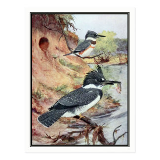 Vintage Belted Kingfisher by Robert Bruce Horsfall Postcard