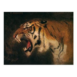 Vintage Bengal Tiger Big Cat Roaring, Wild Animal Postcard
