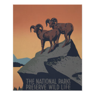 Vintage Bighorn Sheep Wildlife Poster