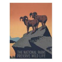 Vintage Bighorn Sheep Wildlife Poster Postcard