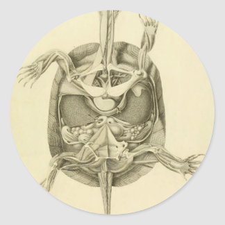 Vintage Biological Turtle Anatomy Classic Round Sticker