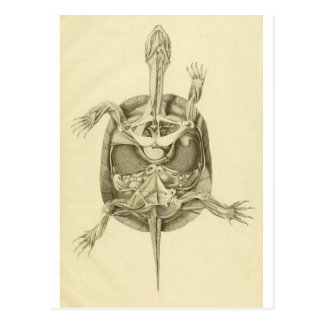 Vintage Biological Turtle Anatomy Postcard