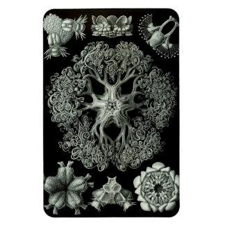 Vintage Biology Textbook  illustration - magnet