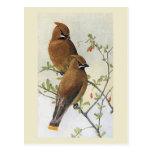 Vintage Bird 01 Waxwing Postcard