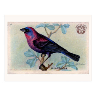 Vintage Bird 04 Postcard