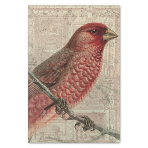 Vintage Bird Collage Tissue Paper