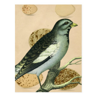 Vintage Bird Digital Art Postcard