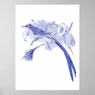 Vintage Bird Drawing   Blue   Sunbirds Poster