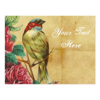 Vintage Bird Drawing Postcard