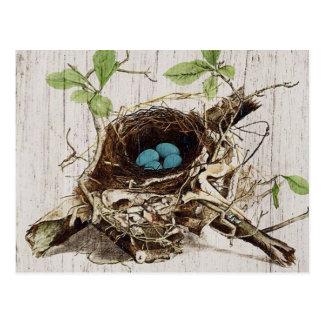 vintage bird nest french botanical art postcard