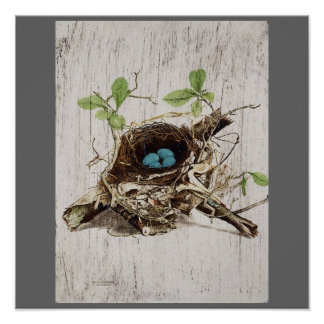 vintage bird nest french botanical art poster