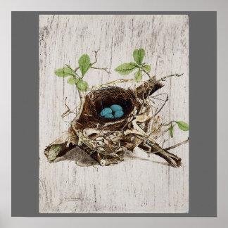 vintage bird nest french botanical art poster