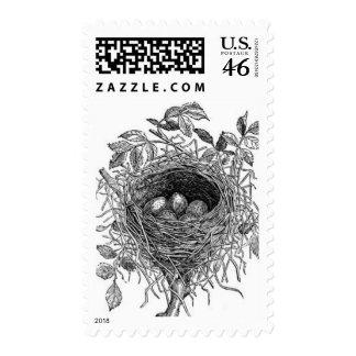Vintage Bird Nest Illustration Stamps