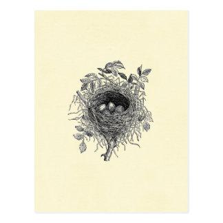 Vintage Bird Nest Illustration Postcard
