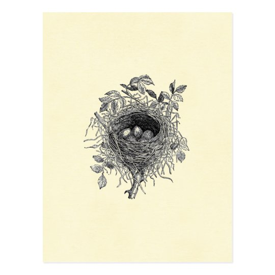 Vintage Bird Nest Illustration Postcard