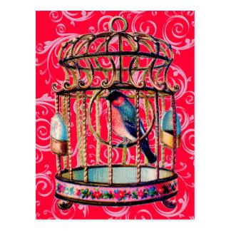 Vintage Birdcage Postcards