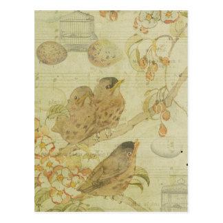 Vintage Birds Branch Birdcage Eggs Music Sheet Postcard