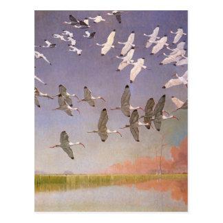 Vintage Birds, Flock of Ibis Flying Over Wetlands Postcard