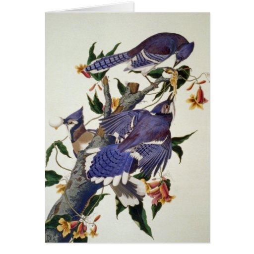 Vintage Birds Greeting Card