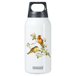 Vintage Birds Insulated Water Bottle