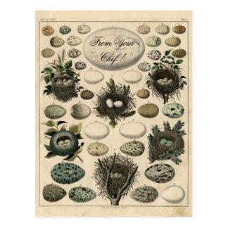 Vintage Birds Nests Egg illustration -Post Card