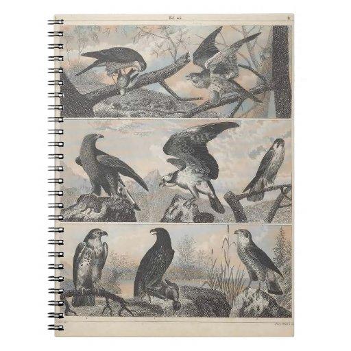 Vintage Birds of Prey Blank Notebook