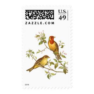 Vintage Birds Postage Stamps