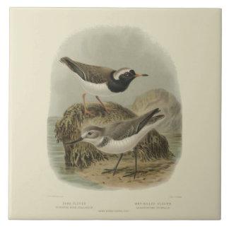 Vintage Birds Sand Plover and Wry-Billed Plover Tile