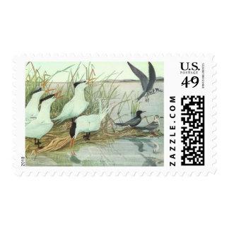 Vintage Birds, Shorebirds in a Marsh Postage